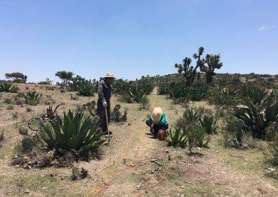 Ensayos sísmicos en México (A)